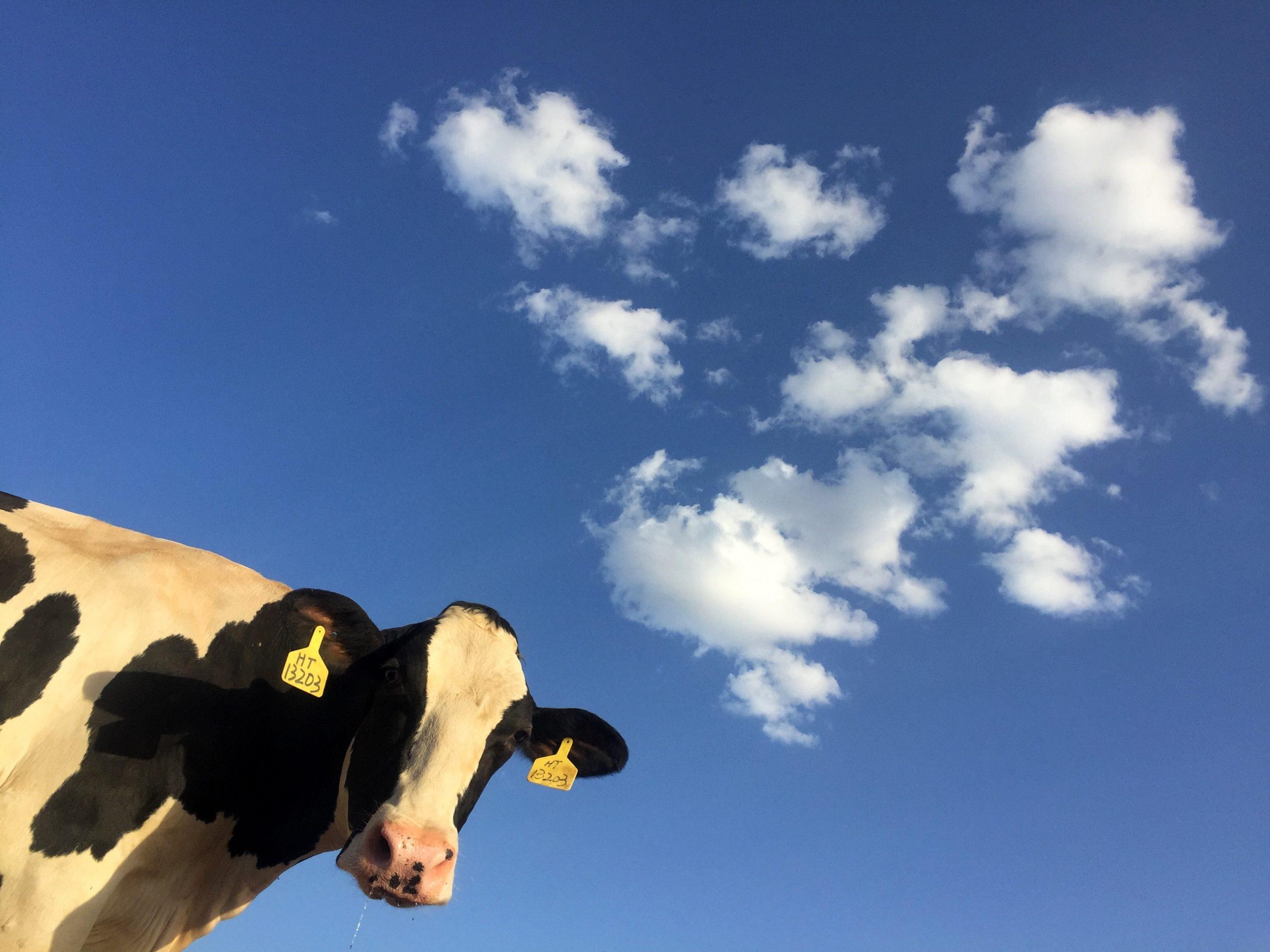 Opération spéciale avec le lait équitable de Faire France